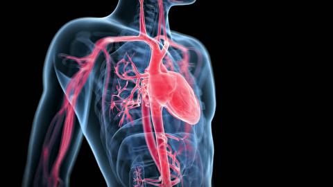 قلب دقیقا چگونه میتپد؟