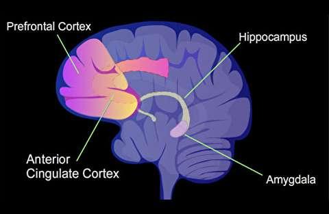 عصبشناسی تخیلات