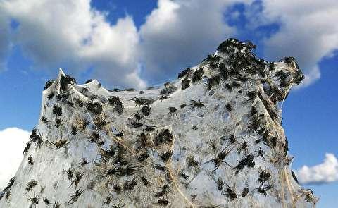 تارهای ترسناک عنکبوتها کنار نهر