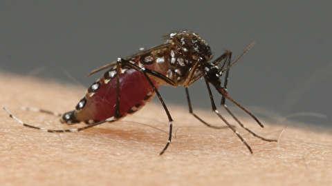 چگونه پشهها نیش میزنند؟