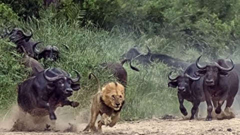 ضد حمله شکار به شکارچی