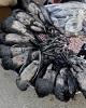 نسل کشی پرندگان در خوزستان هم گردن «عراقی»ها افتاد!