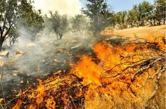 امسال چند صد کیلومتر از جنگل ها و مراتع کشور را از دست خواهیم داد؟
