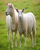 از «دلایل افزایش نرخ گوشت گوسفند» تا «۱۰ شهر گران برای مستأجران»