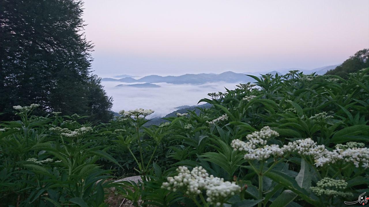 ارتفاعات پونل گیلان