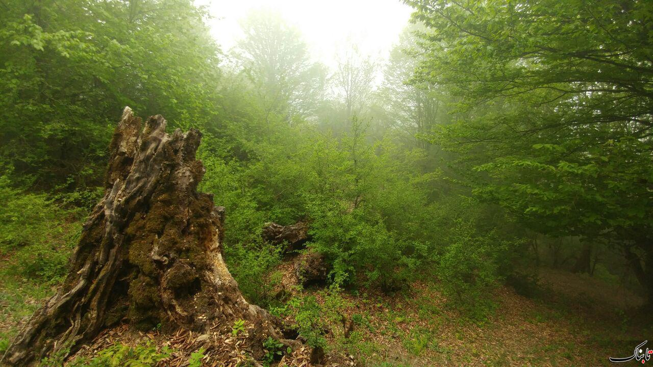 جنگل الیمستان مازندران