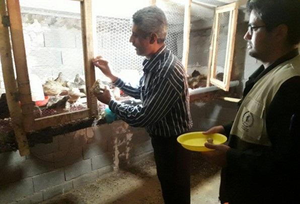 راه اندازی کارگاه پرورش بلدرچین توسط بازنشسته رامیانی