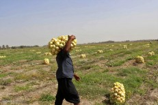 کشاورزان بازنده بازی قیمت ها