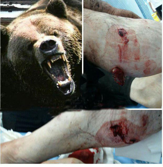 درگیری خونین خرس و پیرمرد قزوینی