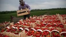 جهش چشمگیر صادرات محصولات کشاورزی در روسیه با وجود تحریمها