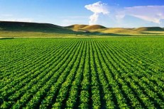 کشاورزی در دیار دیگر تهدید یا فرصت؟