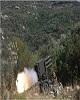 ادغام و اتحاد چند گروه تروریستی در استان حماه سوریه