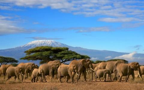 پارک ملی مانت کنیا