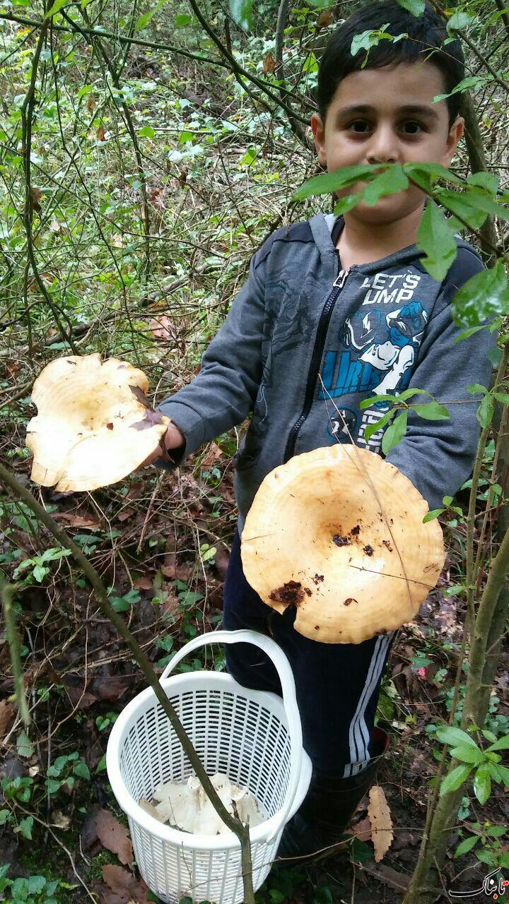 قارچ بومی جنگل های هیرکانی