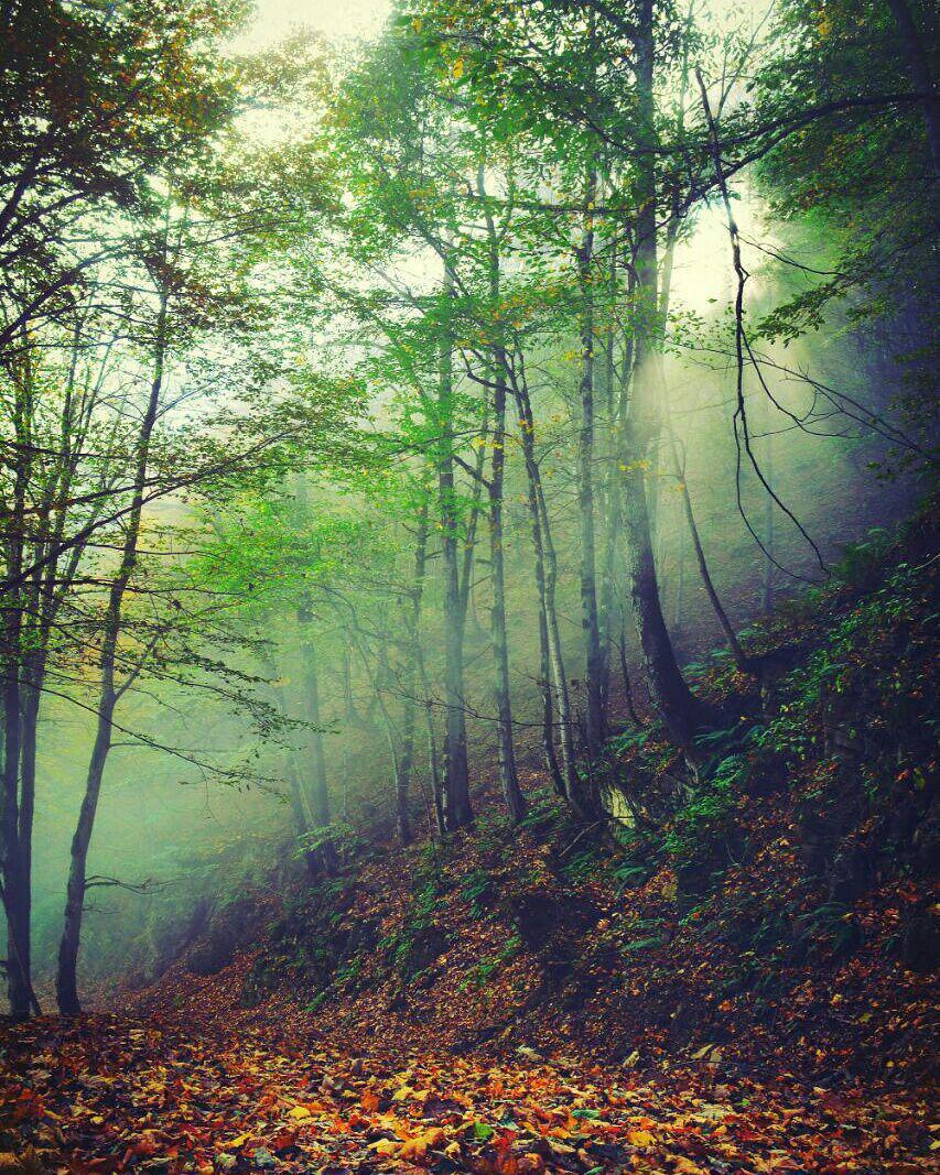 جنگل های شمال منطقه اسالم