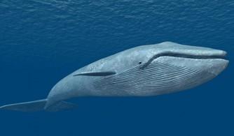 پاسخ تند روحانی به کشور های غربی / آیا کسی قصد شکار نهنگ آبی را در ساحلهای مجازی ایران ندارد؟/ آمارهای...