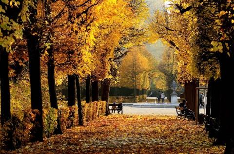 پاییزِ وین از نمای نزدیک