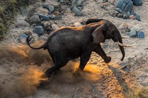 عملیات جابهجایی 520 فیل