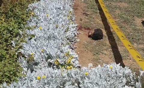 تصاویر کامل حمله تروریستی حرم امام