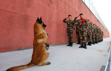 احترام به سگ بازنشسته ارتش تا فرار از دست وال
