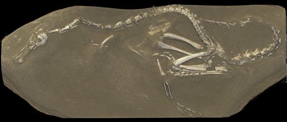 کشف فسیل ۷۵ میلیون ساله شبیه قو