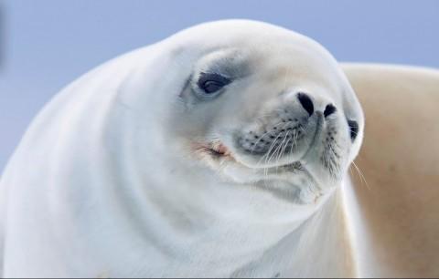 حیات وحش جنوبگان زیبا