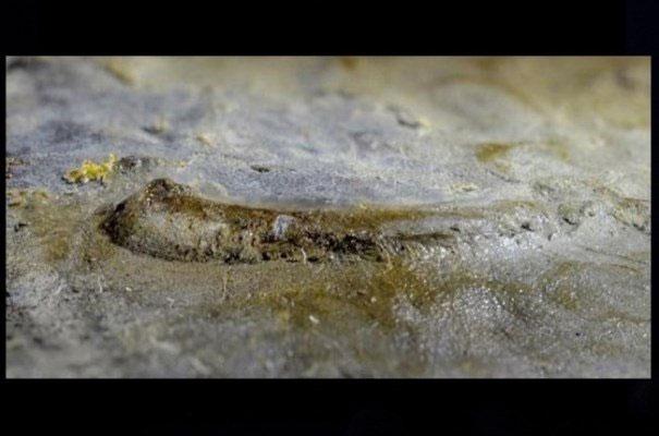 کشف قدیمیترین چشم دست نخورده حیوانات