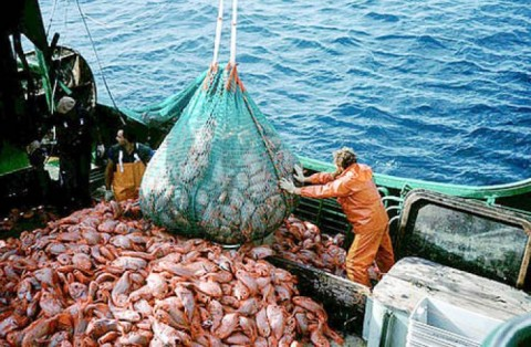 شکار بیش از حد ماهی و آینده اقیانوسها