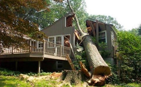 بریدن فاجعه بار درختان