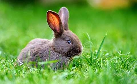 تاریخ مخفی خرگوشها