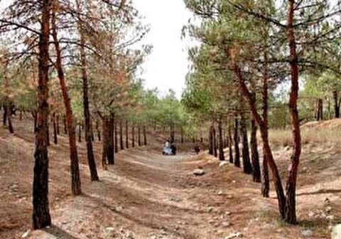 نابودی درختان در پارک جنگلی چیتگر
