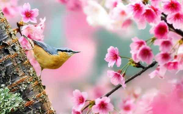 از خوشحالم سیروان خسروی تا موسم گل وحید تاج، از دوران عاشقی سالار عقیلی تا ارابههاش آتش توچلوز