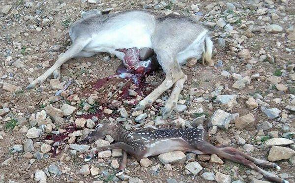 تداوم کشتار بیرحمانه گونههای در معرض انقراض توسط گردشگران!