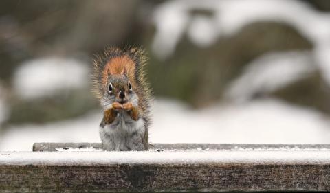 زیبایی پرندگان و سنجابها در زیر بارش برف زمستان