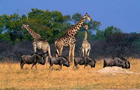 حیات وحش زیمباوه در قاب 4K