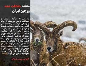 رئیسی: همه رفتارهای مردم ایران باید متأثر از پایتخت فرهنگیاش، مشهد باشد/واکنش دادستان یزد به هنجارشکنی در یک کنسرت