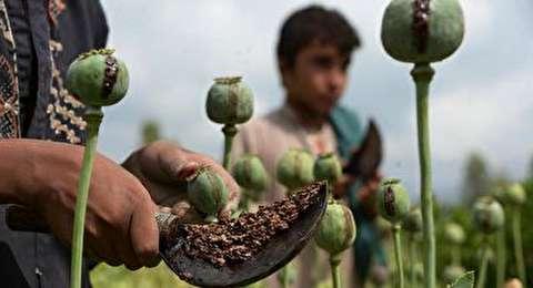 خط تولید و فرآوری تریاک در افغانستان!