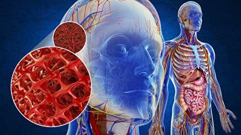 کاربرد نقشه سه بعدی بدن انسان در پزشکی