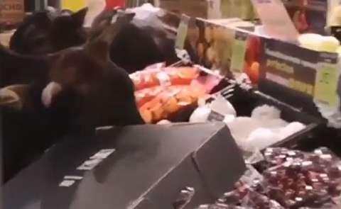 گاوهای هنگ کنگ سوپرمارکت را غارت کردند!