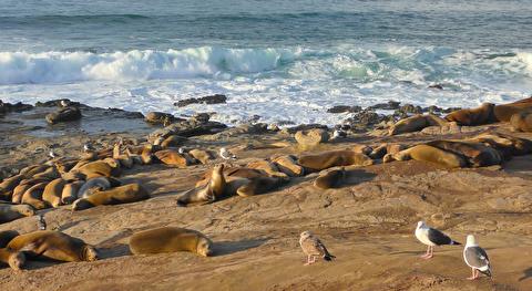 حیات وحش ساحل اقیانوس آرام