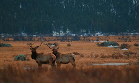پارک ملی کوه راکی از نمایی متفاوت