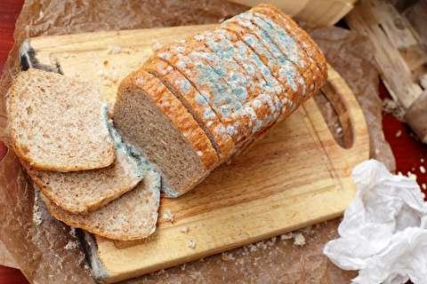 آیا میتوان نان کپک زده را خورد؟