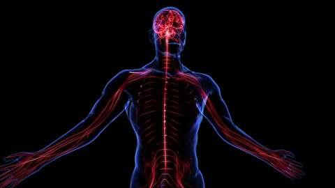 عصبها چگونه کار میکنند؟