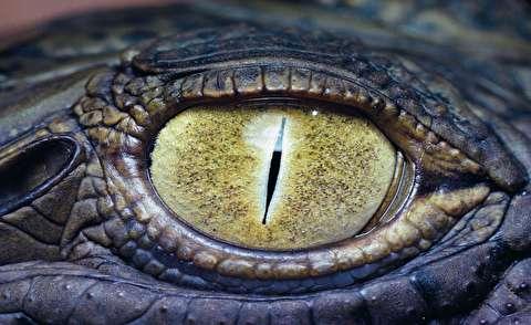 اشک تمساح و ساختار پیچیده چشمش