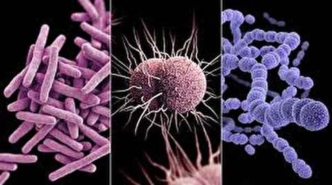 تفاوت باکتری و ویروس چیست؟