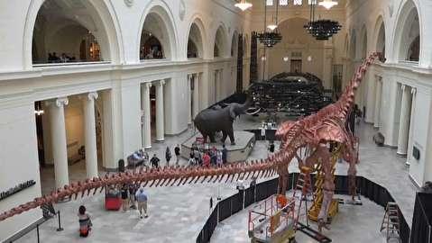 تایملپس ساخت اسکلت بزرگترین دایناسور