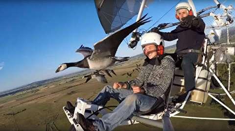لذت پرواز با پرندگان مهاجر