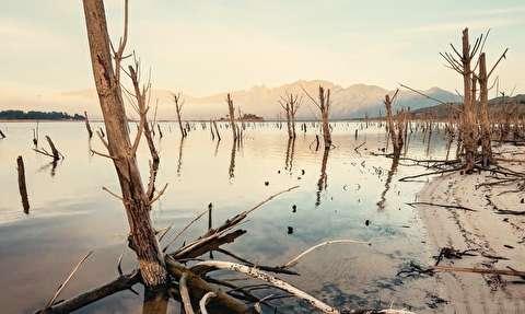 جنگل غرق شده در آفریقای جنوبی