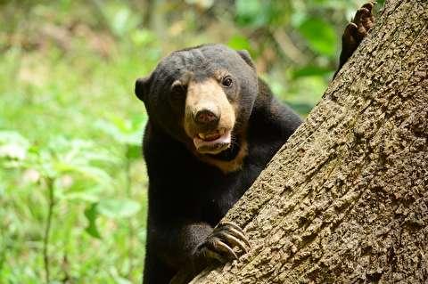زندگی تلخ خرسهای آفتاب