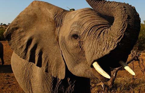 سیستم هشدار فیلها